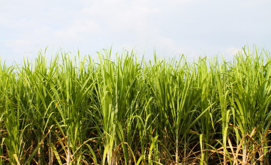 Braskem's sugarcane-based resin helps Guarany's sustainability goals
