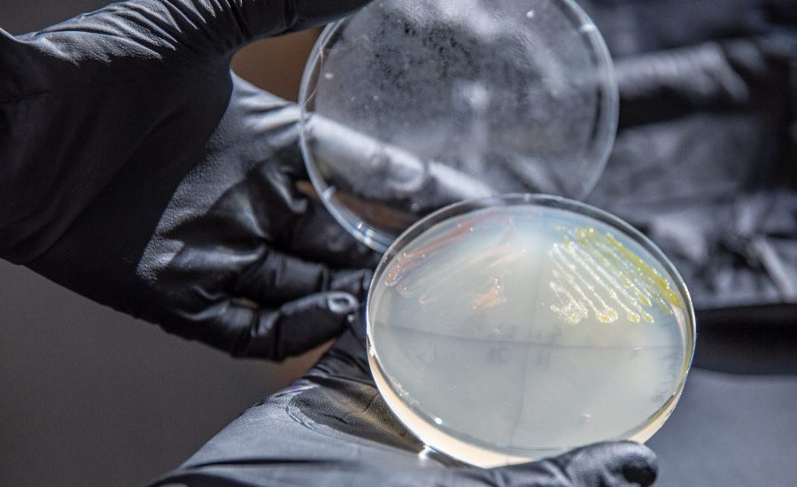 Engineered microbe could be key to unlocking plant-based plastic