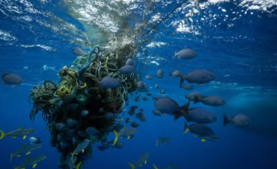 New scientific study maps out how to protect a third of the world's oceans by 2030