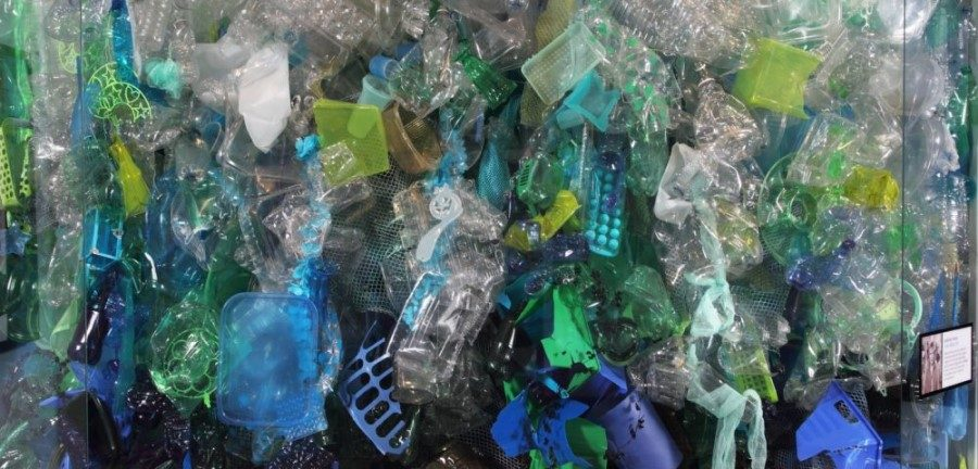 20 US aquariums make pledge to reduce plastic pollution