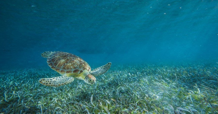 National Geographic issues RFP for projects dedicated to reducing ocean plastic pollution