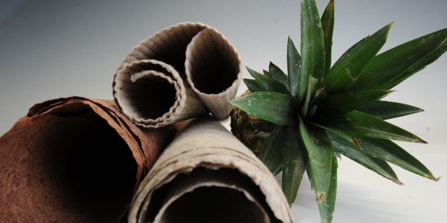 Paper project using pineapple seen cutting plastics use