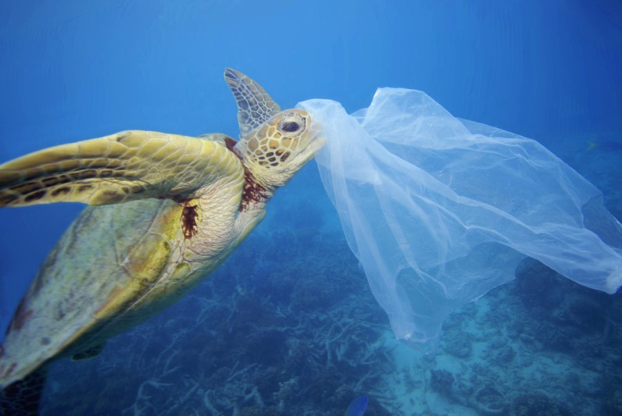 US Congress' ambitious new plan to fight ocean plastic pollution