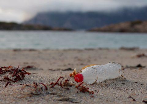 Earth Island sues 10 companies, including Coke, Pepsi, and Nestlé, over plastic use