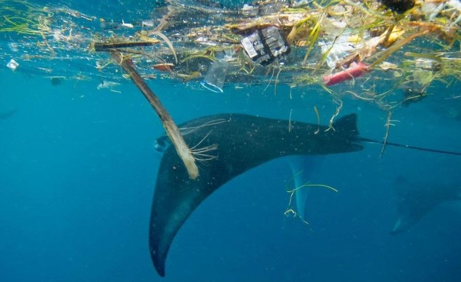 First successful study to detect marine plastic pollution using satellites
