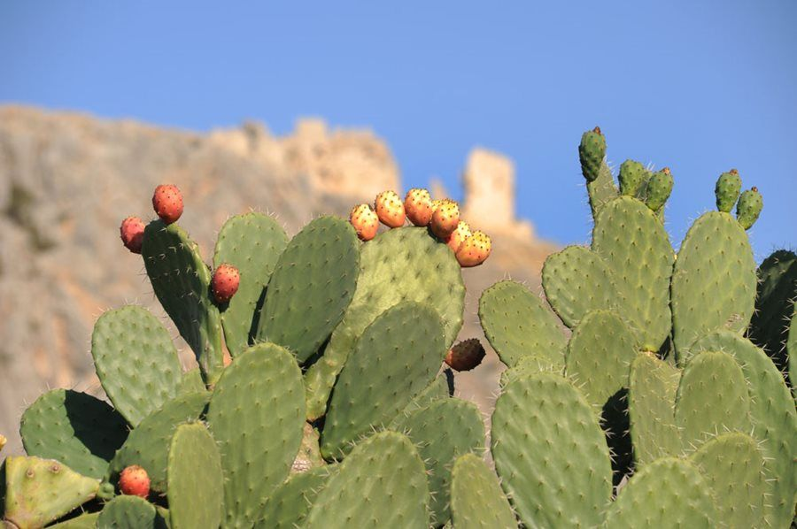 Scientist discovers biodegradable plastic alternative: could cactus juice be the new plastic?
