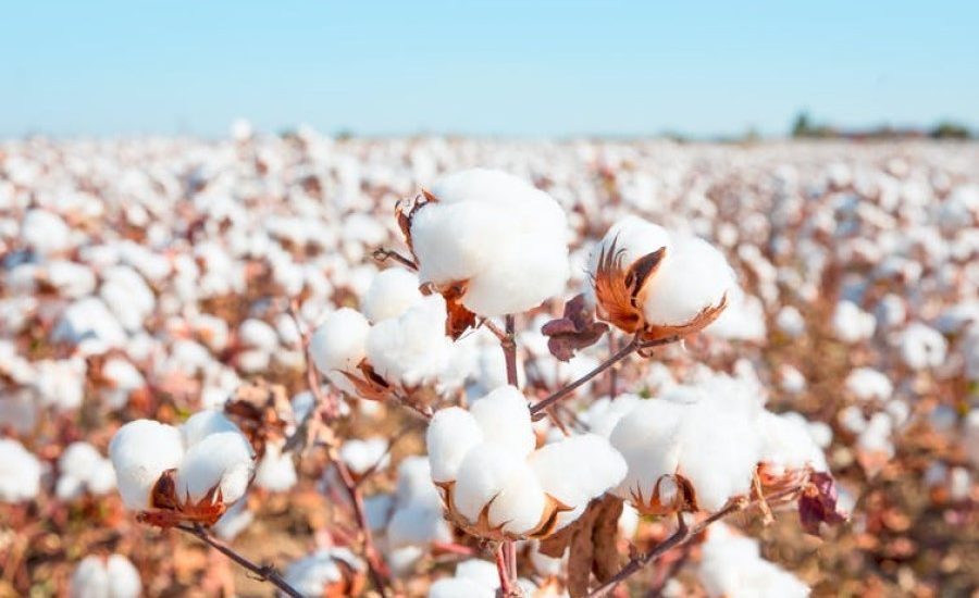 Following a t-shirt from cotton field to landfill shows the true cost of fast fashion